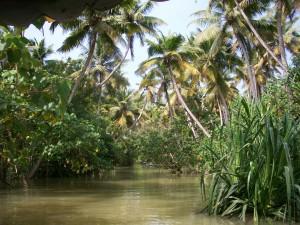 1 la mangrove