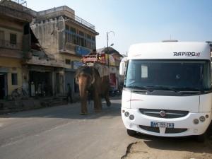 34 elephant près du cc