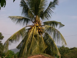 La plantation de fruits exotiques