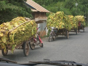 Cambodge de tabac