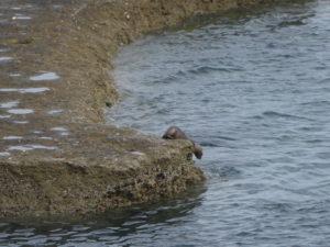 Péninsule Valdes éléphants de mer