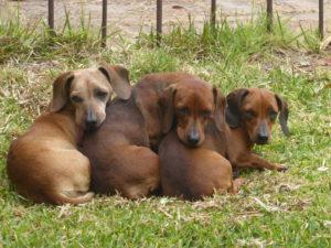 La maman et ses deux petits