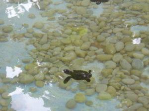 bébé tortues