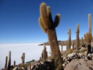 L'île aux cactus sur le salariat