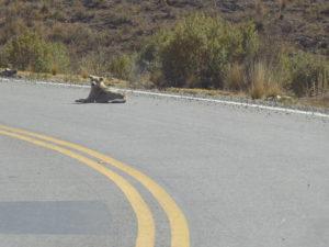 sur le bords des routes ,il y a beaucoup de chiens mendiants