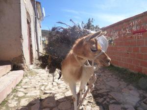 le lama aussi est bien chargé