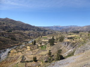 le cañon de Colca et les cultures en terrasses