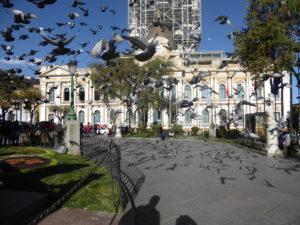 les nombreux pigeons sur la place Murillo