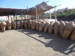 jarres pour la fermentation du pisco