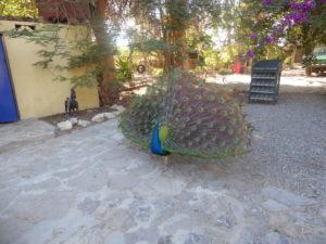 au camping Wasipunko