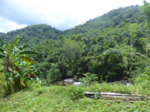 la montagne est couverte de forêts denses