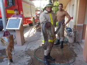 le boa dans les mains du pompier