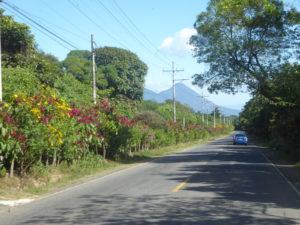 sur la route des fleurs