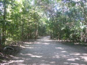 beau sentier dans la jungle au site de Cobá