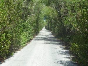 route étroite pour Isla Arena
