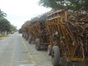 convoi de transport de canne à sucre