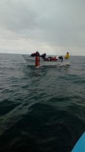 les baleines s'approchent tout près du bateau