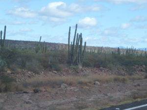 sur les routes du Sud nous ne voyons que des cactus